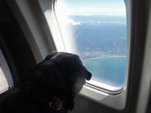 Window seat for dog
