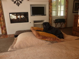 Amazing Advantages In Pet Friendly Apartment Rentals