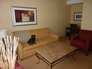Suite at Sheraton Toronto Airport Hotel
